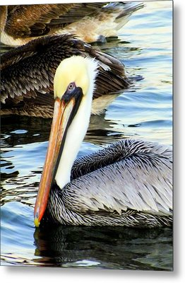 Pelican Pete Metal Print by Karen Wiles