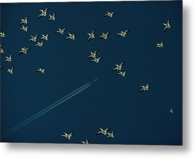 Pelicans And Jet Fly Above Great Salt Metal Print by James L. Amos
