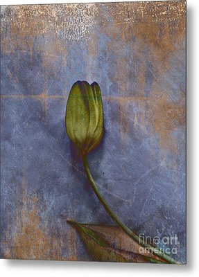 Penchant Naturel - 07at04b3 Metal Print by Variance Collections