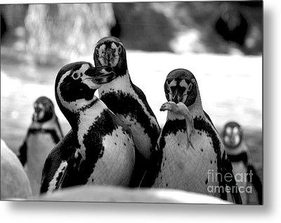 Penguins Metal Print by Pravine Chester