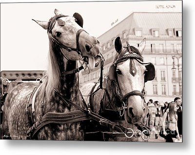 Performing Horses Metal Print by Helge Peters