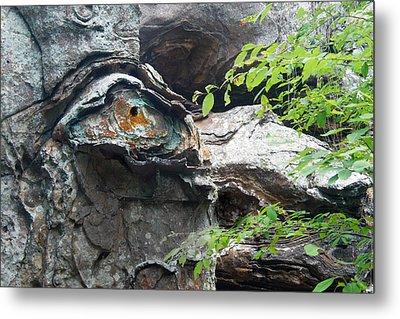 Petrified Prehistoric Monster In Arkansas Metal Print by Douglas Barnett