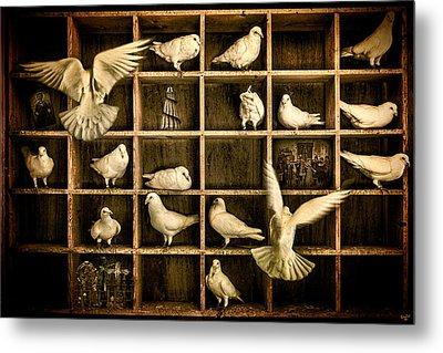 Pigeon Holed Metal Print by Chris Lord