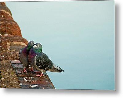 Pigeons In Love Metal Print by Image by J. Parsons