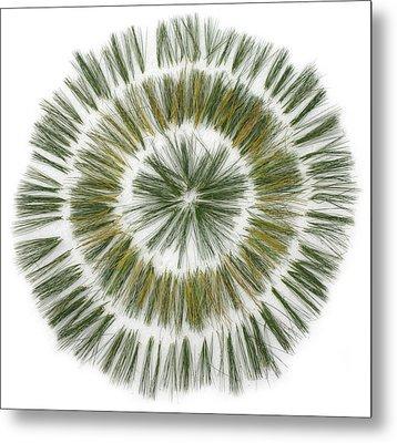 Pine Needle Flower Metal Print by David Esslemont
