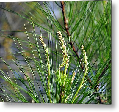 Pine Needles Metal Print by Al Powell Photography USA