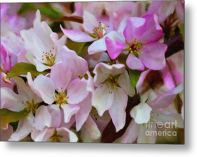 Pink And White Crabapple Blossoms Metal Print by Donna Munro