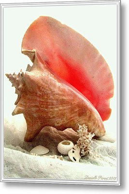 Pink Cong Shell Metal Print by Danielle  Parent