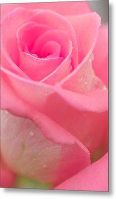 Pink Rose Metal Print by Atiketta Sangasaeng