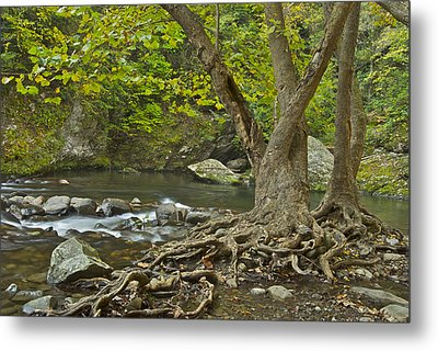 Planted By The Rivers Of Water Metal Print by Michael Peychich