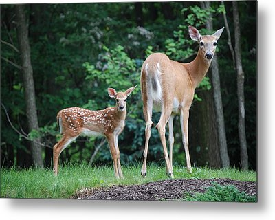 Please Dont Shoot Metal Print by Kathy Gibbons