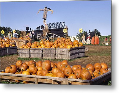 Plenty Of Pumpkins Metal Print by Sally Weigand