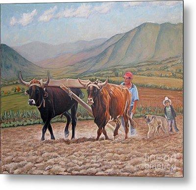 Ploughing In Ocotlan Metal Print by Judith Zur