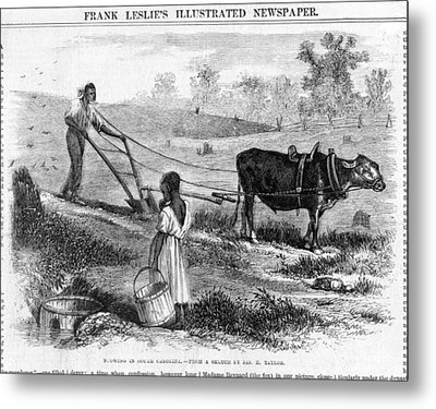 Plowing In South Carolina.  African Metal Print by Everett