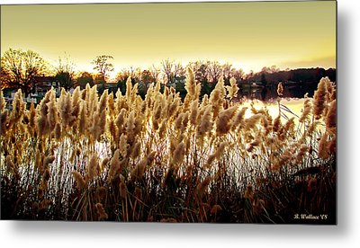 Pond Grasses Metal Print by Brian Wallace