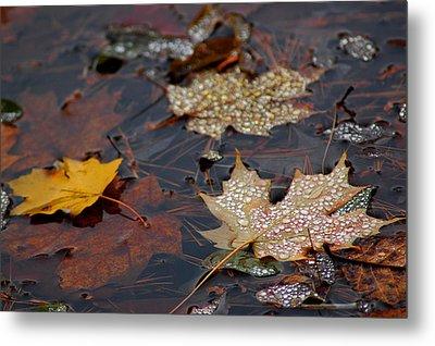Pond Leaf Dew Drops Metal Print by LeeAnn McLaneGoetz McLaneGoetzStudioLLCcom