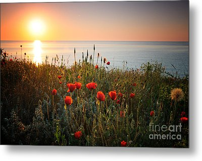 Poppies In The Sunrise Metal Print by Ionut Hrenciuc