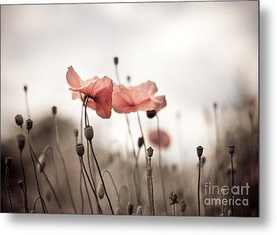 Poppy Flowers 03 Metal Print by Nailia Schwarz
