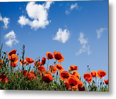 Poppy Flowers 05 Metal Print by Nailia Schwarz