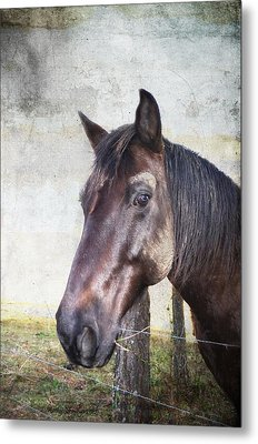 Portrait Of A Horse Series V Metal Print by Kathy Jennings