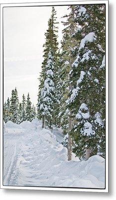 Powdery Snow Path Metal Print by Lisa  Spencer