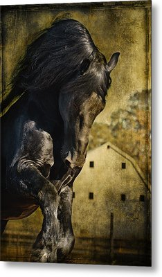 Power House Horse D1496 Metal Print by Wes and Dotty Weber