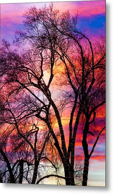 Powerful Trees Metal Print by James BO  Insogna