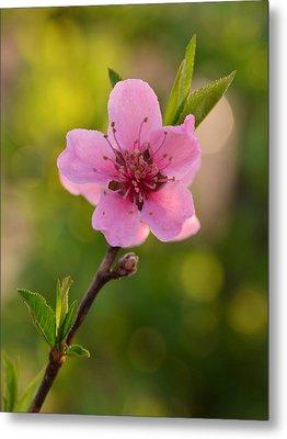 Pretty Pink Peach Metal Print by JD Grimes
