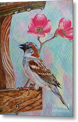 Ptg   Sparrow With Pink Dogwood In The Rain Metal Print by Judy Via-Wolff