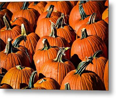 Pumpkins Galore Metal Print by Julie Palencia
