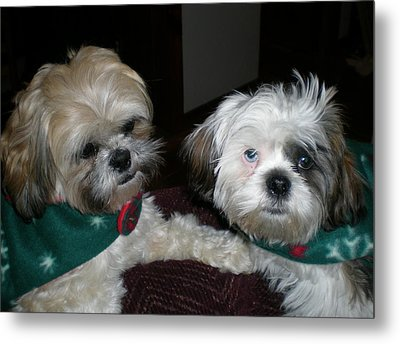 Puppy Love Metal Print by Sherry Hunter
