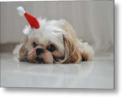 Puppy Wearing Santa Hat Metal Print by Sonicloh
