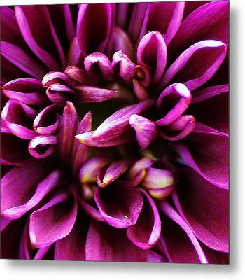 Purple Explosion Metal Print by Bruce Bley