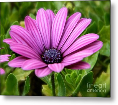 Purple Flower Metal Print by Sara  Mayer
