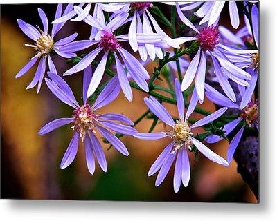 Purple Flowers Metal Print by Andre Faubert