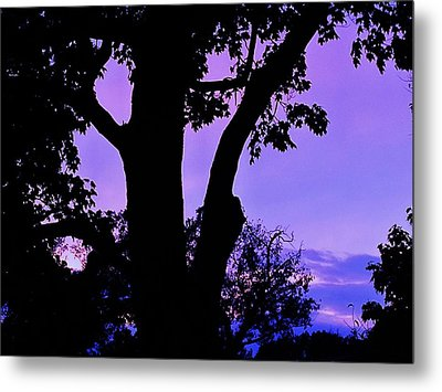Purple Morning Metal Print by Todd Sherlock