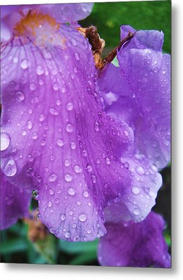 Purple Rain Metal Print by Todd Sherlock