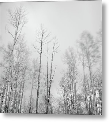 Quaking Aspens Above Santa Fe Metal Print by David Teter