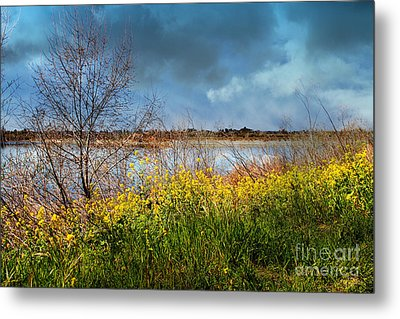 Quarry Lakes In Fremont California . 7d12643 Metal Print by Wingsdomain Art and Photography