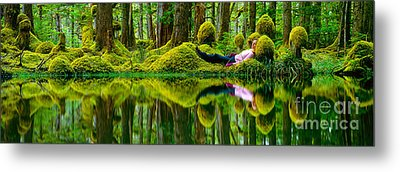 Queen Charlotte Island Swamp Metal Print by David Nunuk