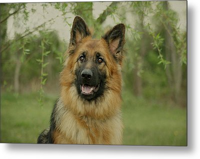 Queena - German Shepherd Metal Print by Sandy Keeton