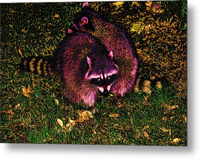 Racoons In Stanley Park Metal Print by Lawrence Christopher