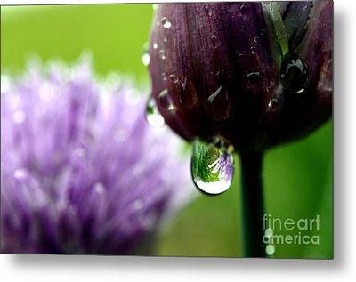 Raindrops On Chives In Bloom Metal Print by Thomas R Fletcher