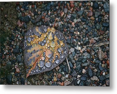 Raindrops Metal Print by Shirley Mailloux