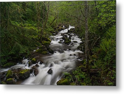 Rainier Forest Flow Metal Print by Mike Reid