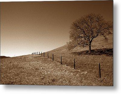 Ranch Road Oak Metal Print by Kathy Yates