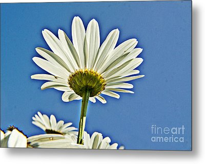 Reach For The Blue Sky Metal Print by Darleen Stry