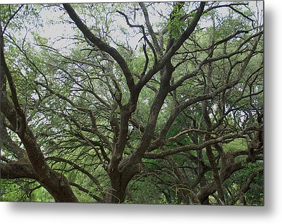 Reaching Out Metal Print by Aimee L Maher Photography and Art Visit ALMGallerydotcom