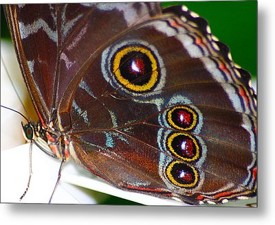 Red And Yellow Eyes Metal Print by Scott Hovind