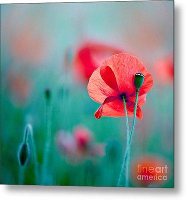 Red Corn Poppy Flowers 04 Metal Print by Nailia Schwarz